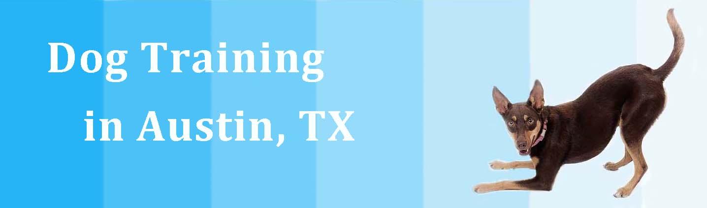 Austin-Kelpie-Training