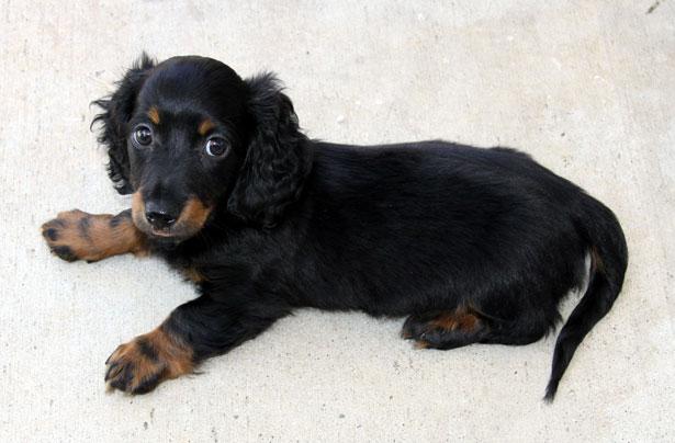 Puppy-24511277778995262f